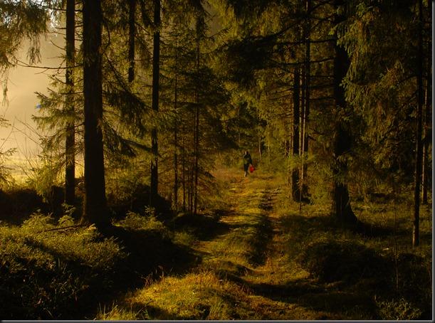 suomalainen syys metsä suppilovahvero 083