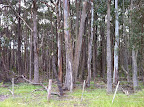 Dec 4 - Wombat State Forest