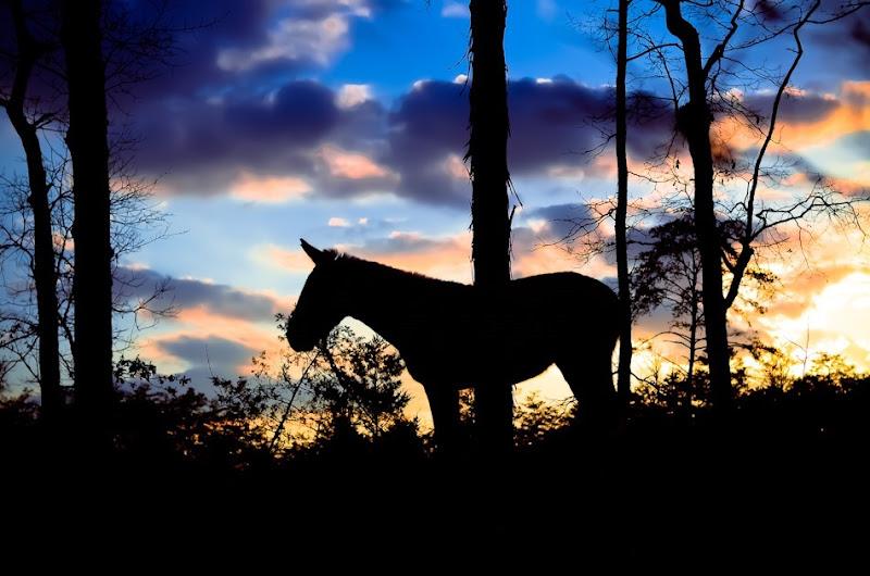 HORSE-6113