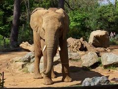 2009.05.02-041 éléphants