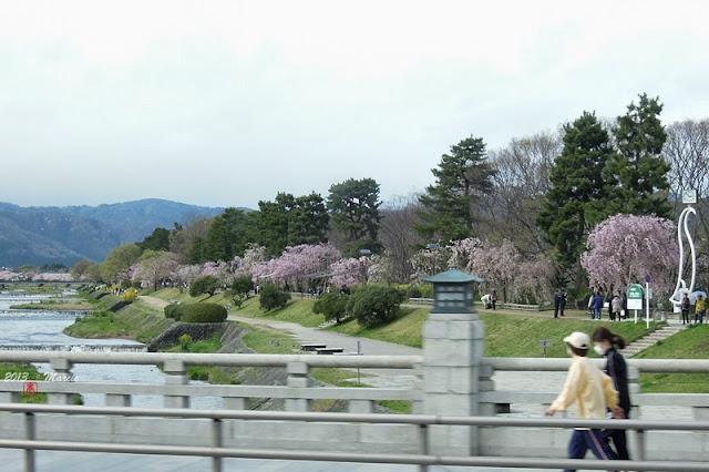日本 京都 半木之道 櫻