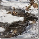 iced stream