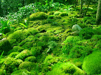 GREEN-carpet-of-MOSS.jpg