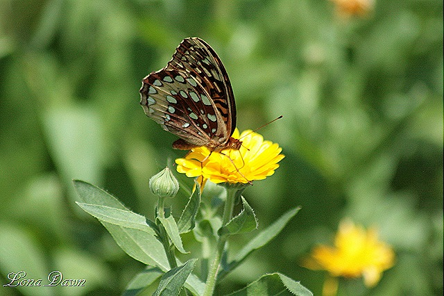 [M_Butterfly%255B11%255D.jpg]