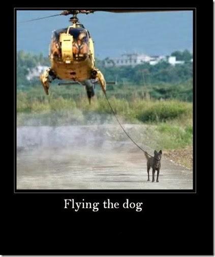 flyingthedog