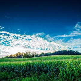 Cornfield by Štefan Brajković - Landscapes Prairies, Meadows & Fields ( koprivnica-križevci county, cornfield, croatia, hampovica )
