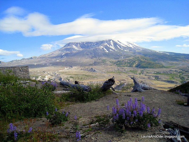 Mt. St. Helens, lupine,