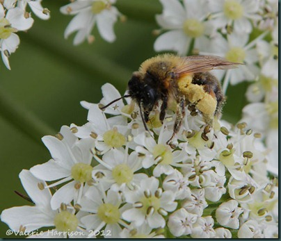 36-Bee