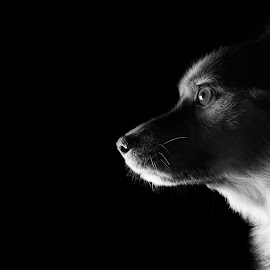 Puppy Face by Yuval Elias - Animals - Dogs Portraits ( blackandwhite, monochrome, pet, dog, portrait )