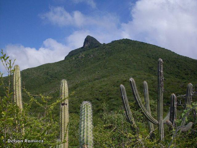 The winning photo of the IUCN Red List for Threatened Ecosystem contest shows Cerro Santa Ana, Paraguana Peninsula, Venezuela. Photo: Delson Ramírez / IUCN