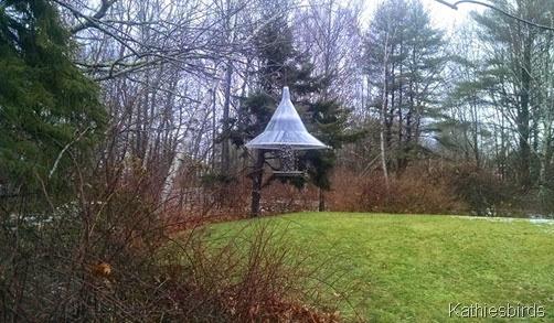 1. 12-11-14 bird feeder1