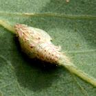 Green Planthopper Nymph