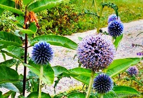 7-28-14 flowerheads