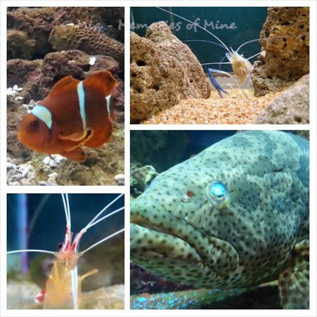 UMS Aquarium & Marine Museum