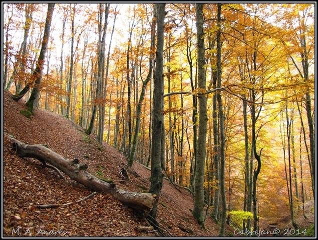 Lantz otoño 052