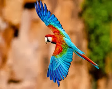 Amazing Pictures of Animals, Photo, Nature, Incredibel, Funny, Zoo, Red-and-green Macaw, ara chloropterus, Bird,  Alex.  (14)