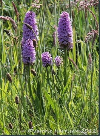 9-orchids