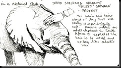 October 30, 2012 Orphan Elephant sketch