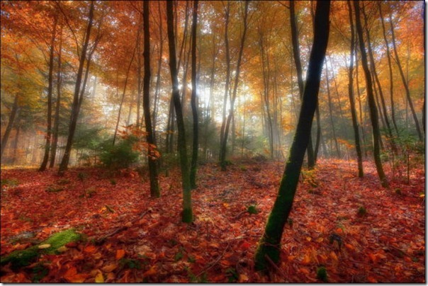 Lindas imagens de folhas do outono (13)