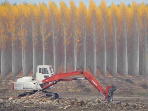 High Quality Boardman Tree Farm 2 Awesome Ideas