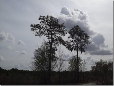 Trees Nichole