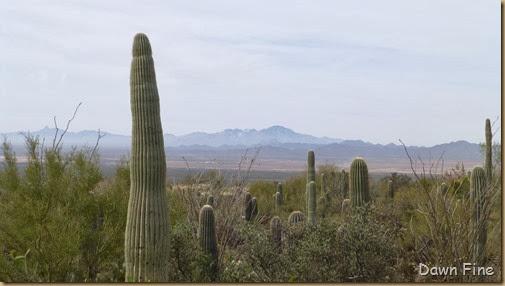 Desert museum_003