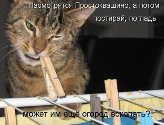 f5dd51e28eebab84c4649136b90_prev