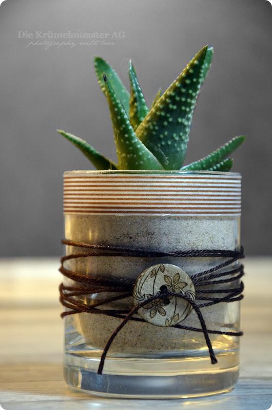 DIY Kaktustöpfchen (2)