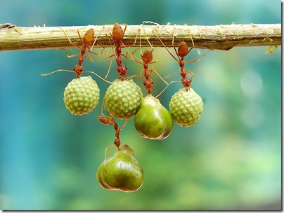 smithsonian-photo-contest-naturalworld-bird-ants-eating-acrobats-eko-adiyanto