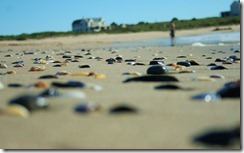 sea_shells_out_the_sea_by_luridrose-d463667