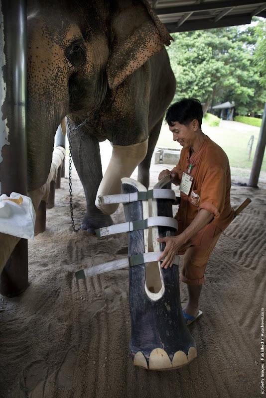 elephant-hospital-10