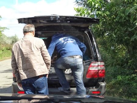 Gitana Winery: Transport in portbagaj