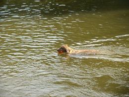 Dogs Trekking 4 (77_1) (7)