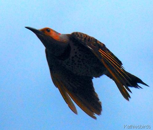 13. bullet bird-kab