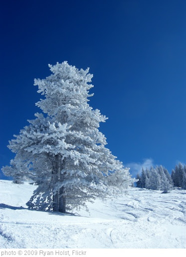 'Snow Covered Tree' photo (c) 2009, Ryan Holst - license: http://creativecommons.org/licenses/by/2.0/