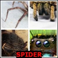 SPIDER- Whats The Word Answers