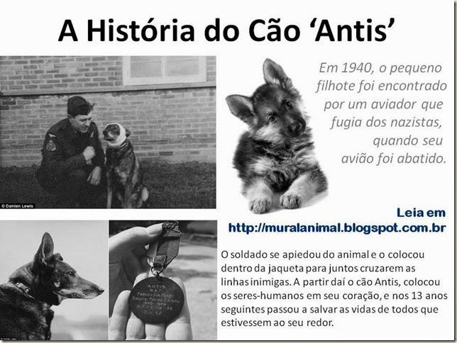 A História do Cão 'Antis'