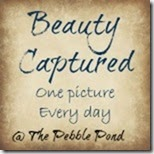 BeautyCaptured3final_zpsd17041a2