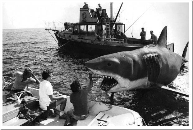 tubarão_2