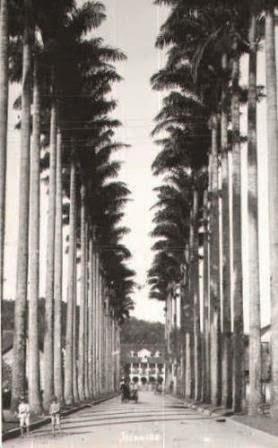 rua das palmeiras 1910