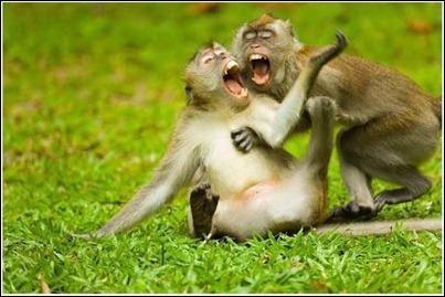 monkeyduet