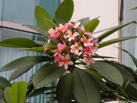 05. Orhidee in Kuala Lumpur.JPG