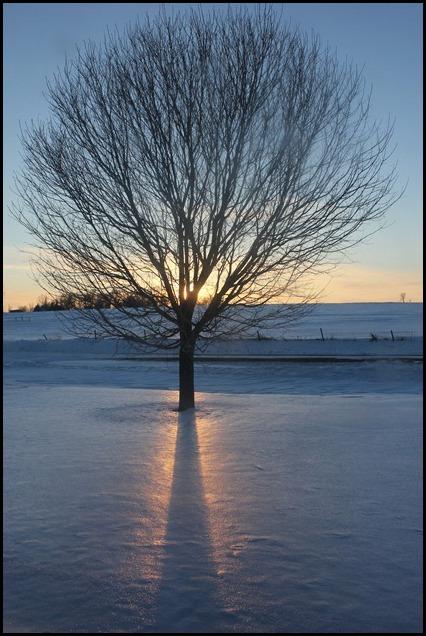 Winter 199