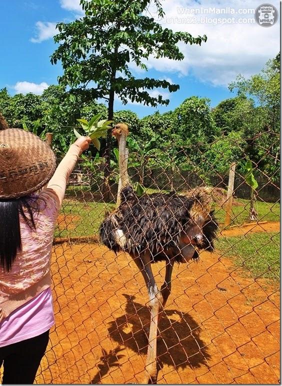 sheridan-beach-resort-sabang-puerto-princesa-tour-palawan (3)