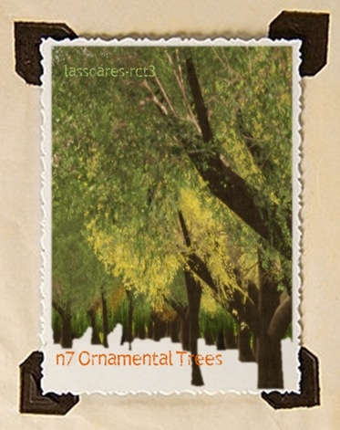 Ornamental Trees (n7) lassoares-rct3