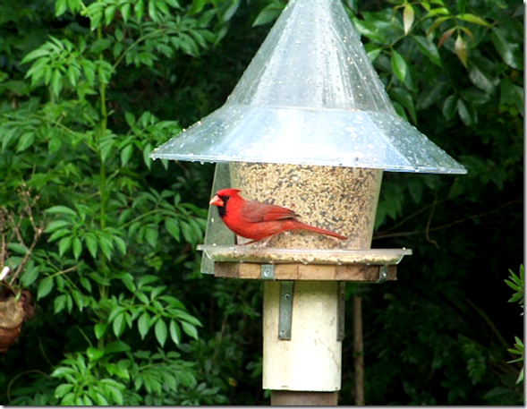snapshot_001 Cardinal