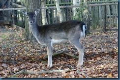 2011-11-28 Wildwood 068