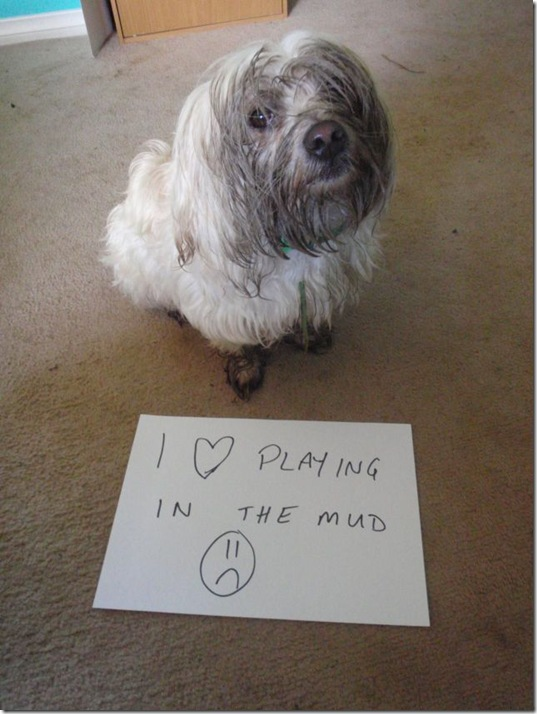 dog-shaming-bad-36