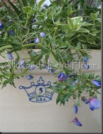 Planting Flowers 031