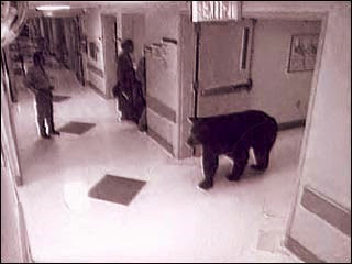Bear in hospital